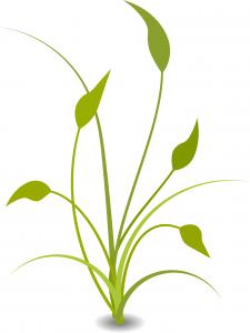 plant-157380