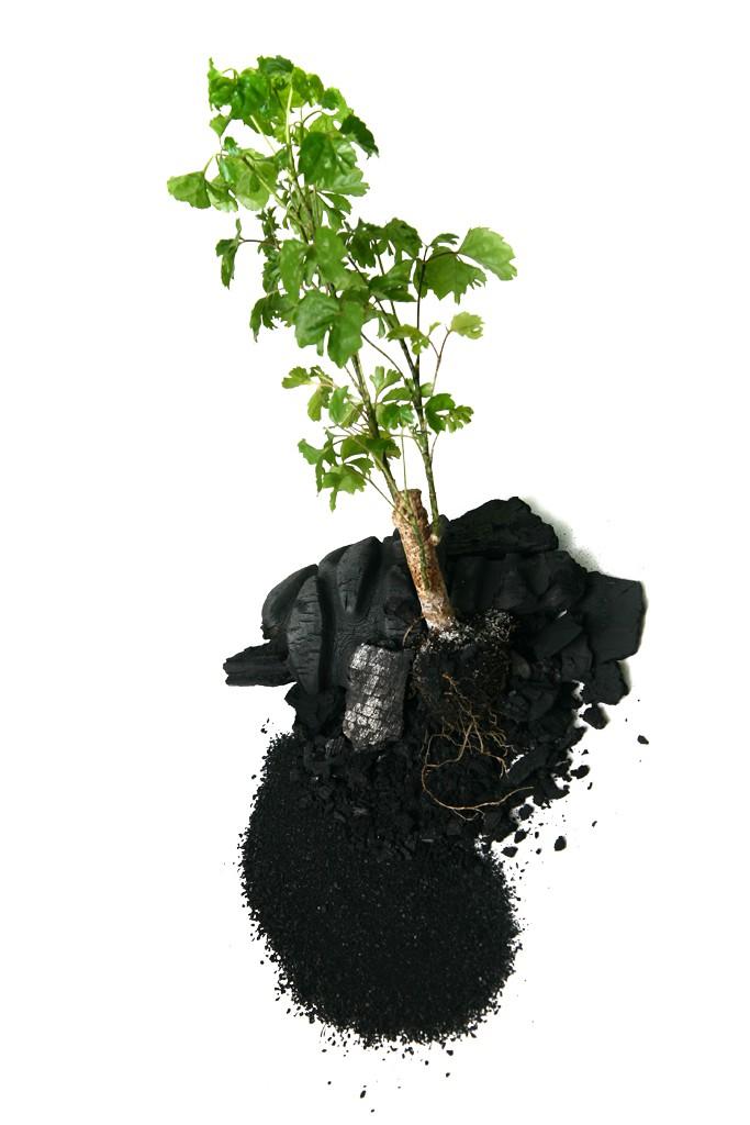 Kohlenstoff_und_Pflanze